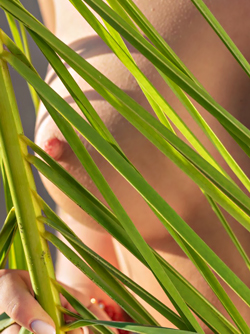 Palm Fronds - Casey on the Beach